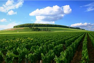 List of Burgundy wines for sale in our wine web shop